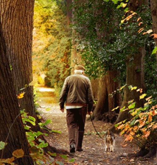 Man walking dog in woods
